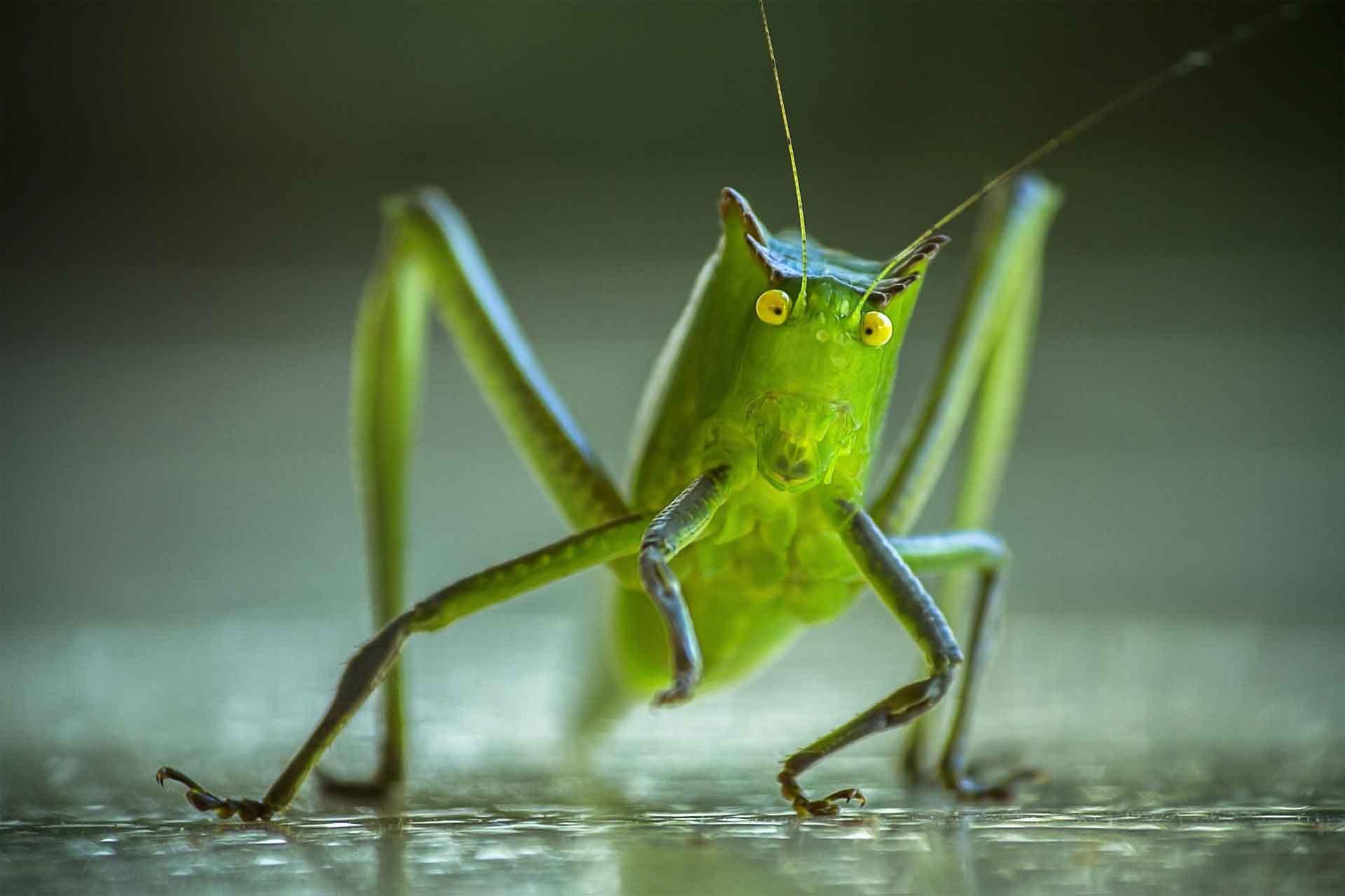 ASH_Cricket