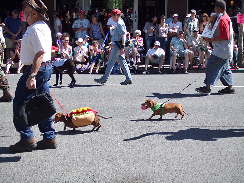 I love the wiener dogs, especially when they are hot dogs! 